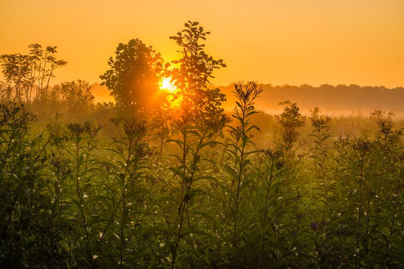 parkland-fog4.jpg