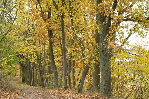Herbststück Buche