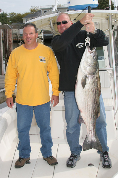 10/11/2009  Pictured are Frank Iannucci and Scott Leonard (left to right) with a beautiful 40 pound striped bass caught yesterday in the Suffolk Marine Striped Bass Tournament.   The big fish are starting to show now. The bass bite should be in full swing by late this week.  I still have some prime dates available for all weeks through November 15th. If you want to fish drop me an email at captal@skimmeroutdoors.com.   Captain Al Lorenzetti