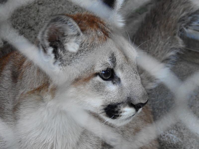 Cheyenne Mtn Zoo 2019 (1205).JPG
