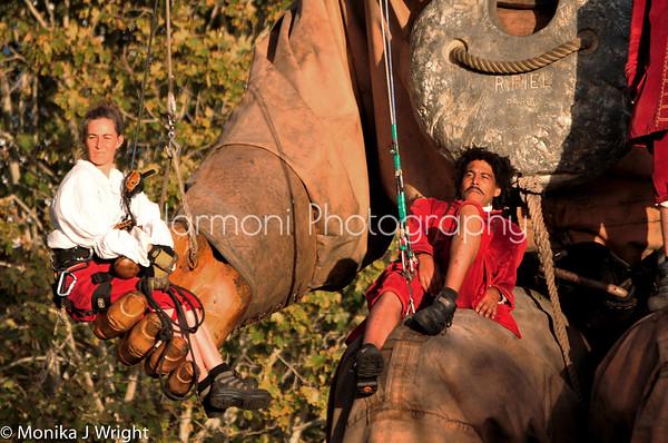 Harmoni Photography Giants