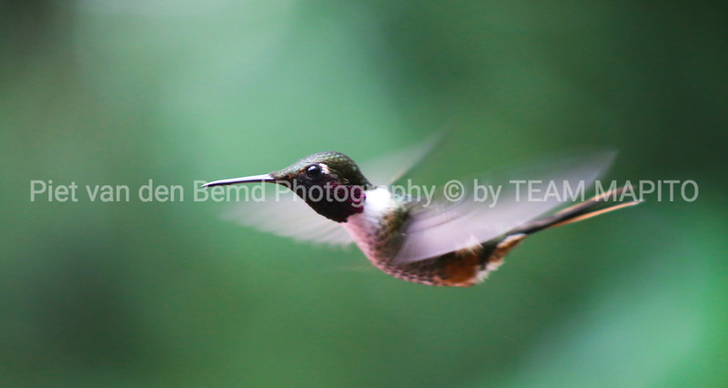 Freelance Nature & Wildlife Photographer