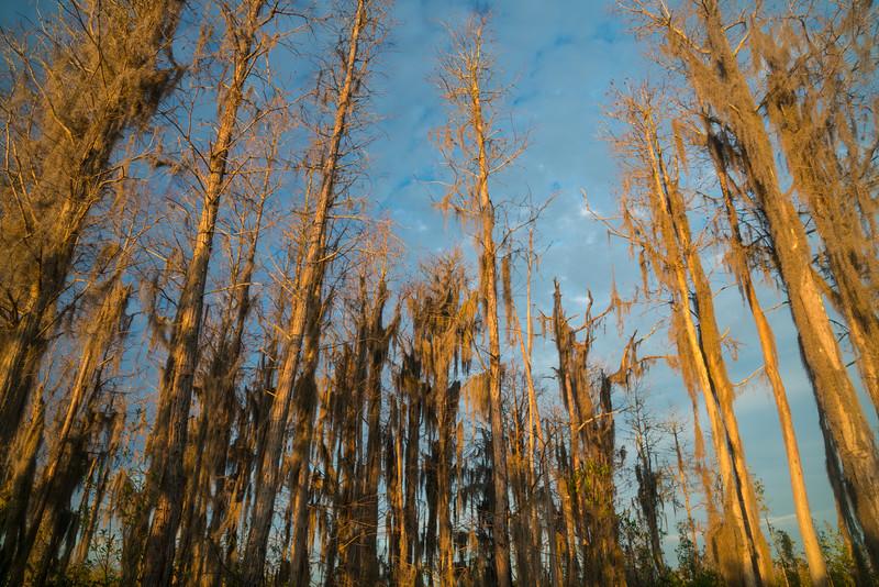 Okeefenokee Swamp 2020-12.jpg