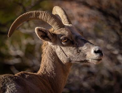 Westbound 2021-Zion Landscape and Wildlife