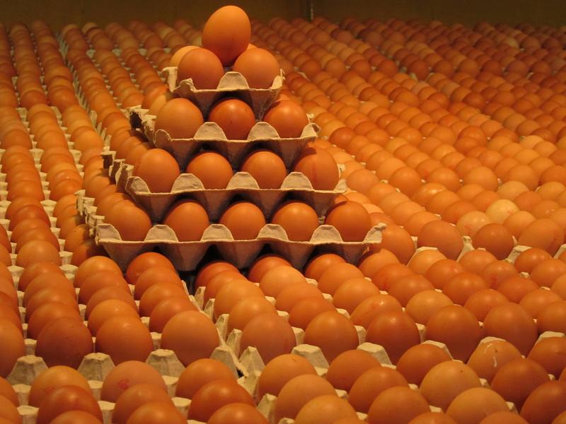 Artsy eggs