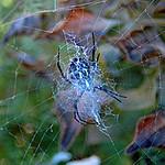 along_came_spider.jpg