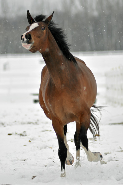 Snowy Dalanta 147 RETOUCHED.jpg