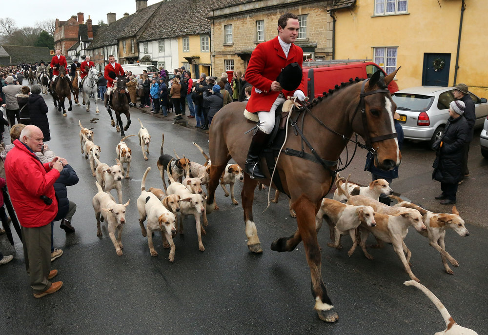 Description of . Stuart Radbourne, huntsman and joint-master with the Avon Vale Hunt, leads the riders and hounds for their traditional Boxing Day hunt, on December 26, 2012 in Lacock, England. As hundreds of hunts met today, Environment Secretary Owen Paterson claimed that moves to repeal the ban on hunting with dogs in England and Wales may not happen in 2013, although he insisted it was still the government's intention to give MPs a free vote on lifting the ban.  (Photo by Matt Cardy/Getty Images)  *** BESTPIX ***