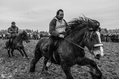 [2015] Paarden Processie, Hakendover, Belgium