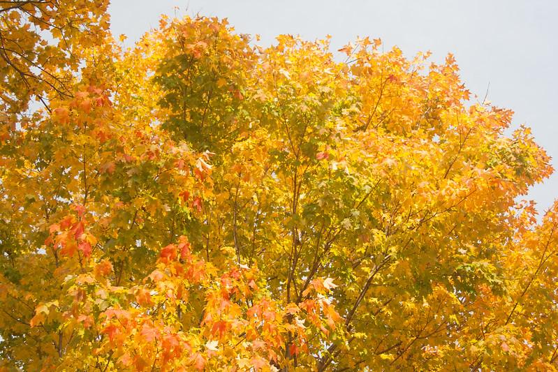 20121013-2012-10-1313-48-2913077.jpg