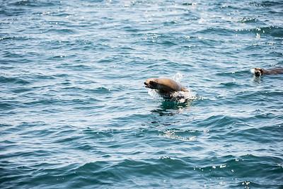 07022016 Blue Whales