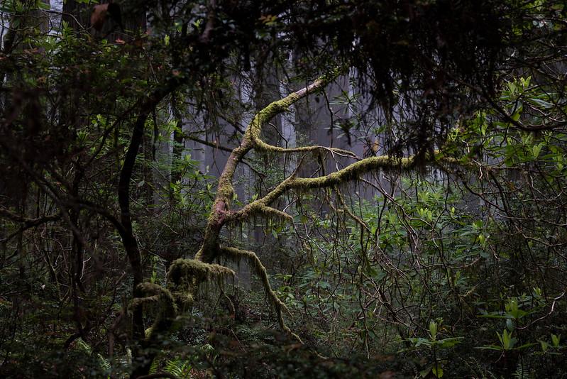 redwoodsFin29-1218.jpg