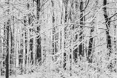 Northwest Pennsylvania Snow
