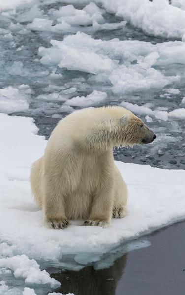 Inspirato-Arctic_Expedition18-04-Russebukta-1551.jpg