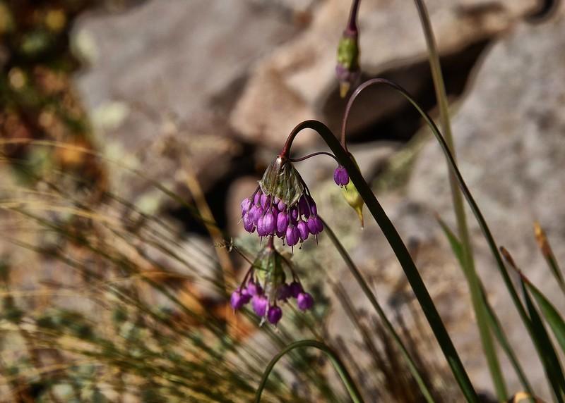 NEA_3200-7x5-Flowers.jpg