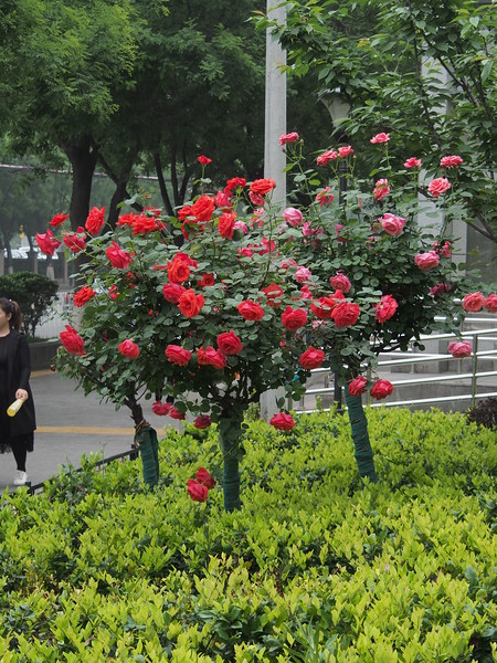 20180422_1434_0381 Springtime in Xi'an