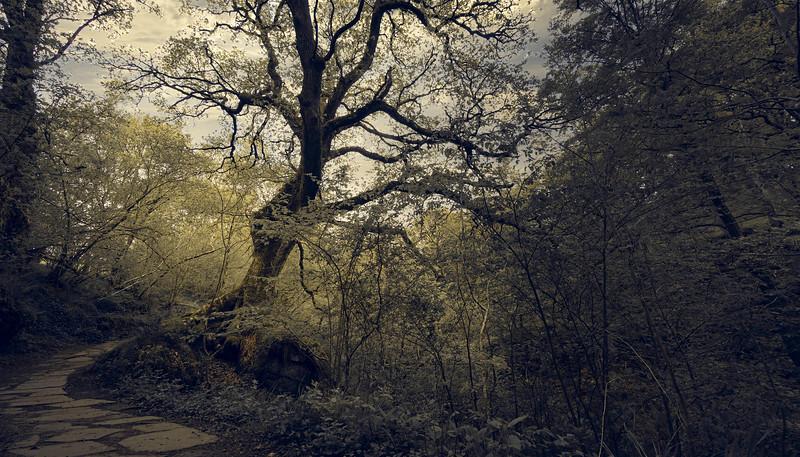 Forest Shadows-119.jpg
