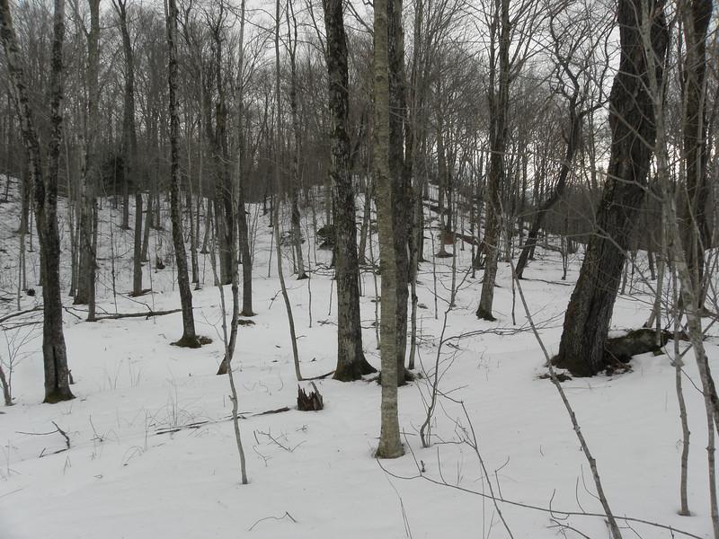 Nice hardwoods.JPG