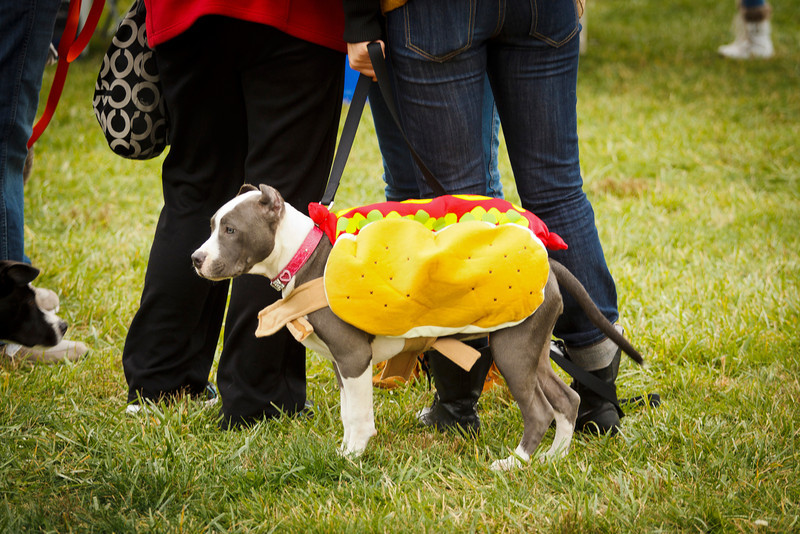 Bark Bash 2012 (438 of 438).JPG