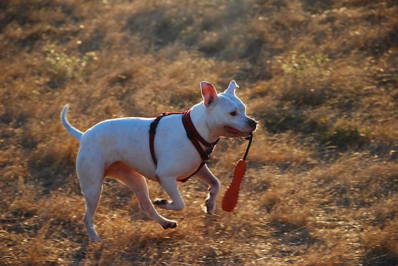 Athena at the dog park.