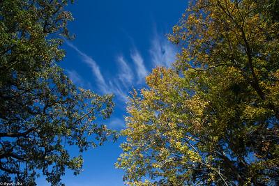 Blue Ridge Fall 2014