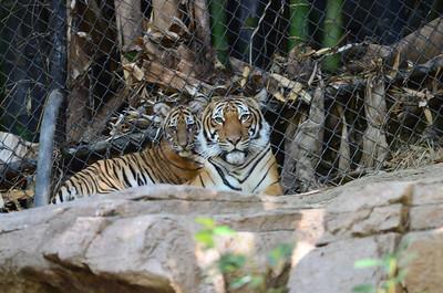 San Diego Zoo - Aug 27, 2011