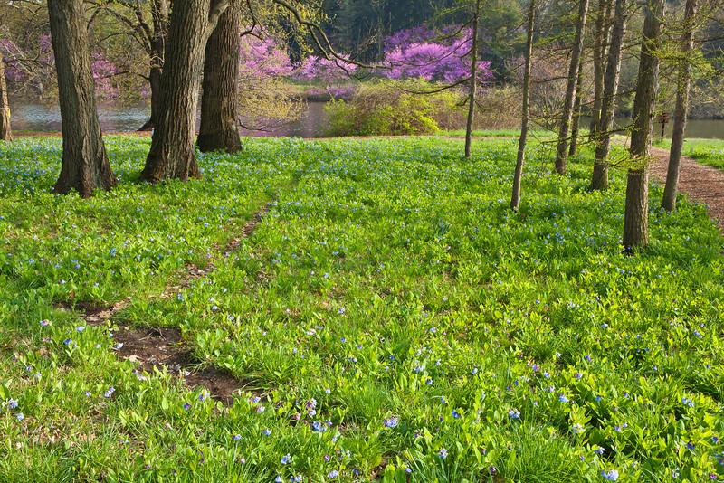 Spring12-1650 shrp.jpg