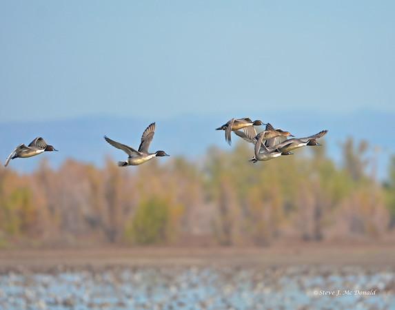 Llano Seco WR 11/26/14