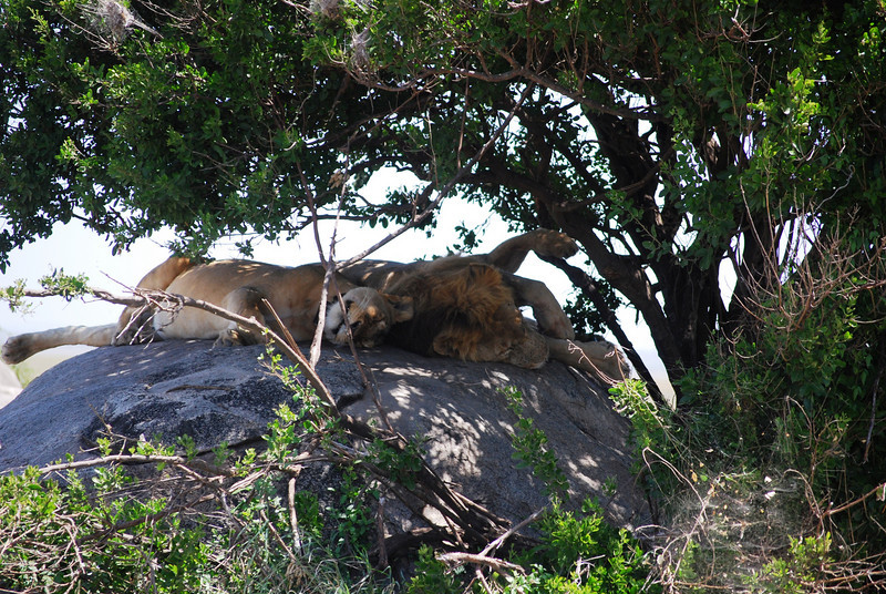 Serengeti (190).JPG