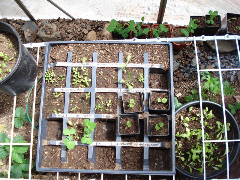 Seedlings 05_22_2007