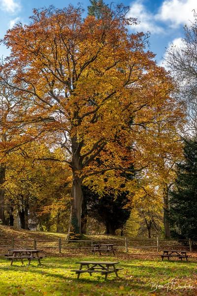 Wakehurst_Autumn-6070.jpg
