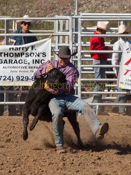 FAHA Bull/Steer 4