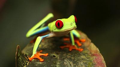 Animals - Costa Rica