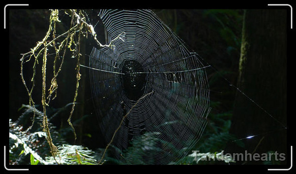 We did see a few webs, but the spiders must have been out of town.