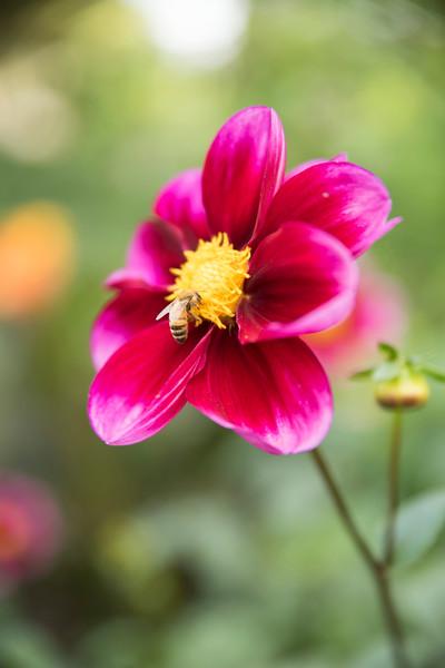 Chicago Botanic Garden 027.jpg