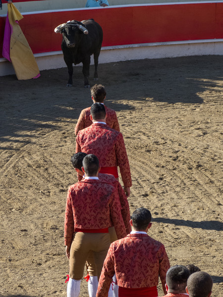 """High speed still sequence: (Next 15 photos) These guys don't give up, no matter how dangerous it is or how bloody they get. The Forcados go for a FOURTH try of """"pega de cara"""" with the same bull. The bull wins again!"""