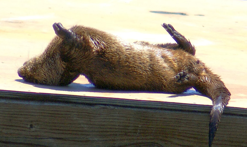 . Scratching an itch in the warm sunshine. (Courtesy of Krist Jensen)