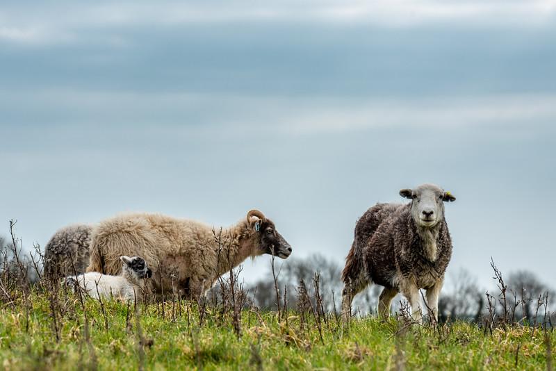Malling Down Lambing Season-4.jpg