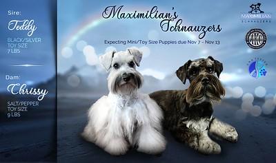 Chrissy & Teddy Puppies. DOB 11/07/2020
