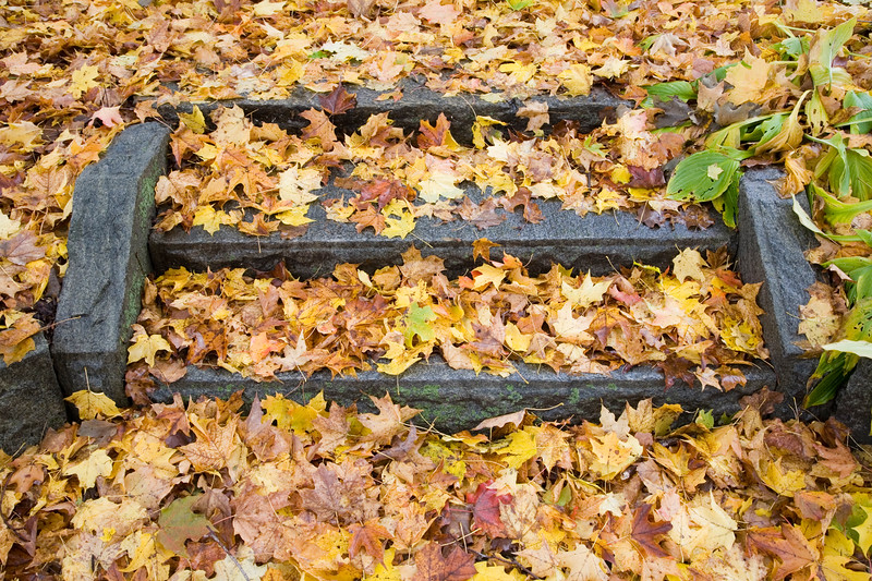Old stone steps covered by dead maple leaves, Connecticut, USA.