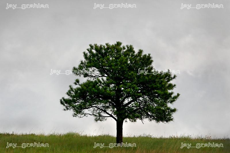 20090713_Nature02.jpg