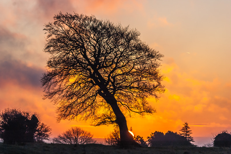 Rodborough Lone Tree sunrise 6020.jpg