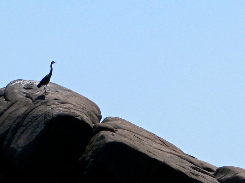 Lone Sea Bird on Rock - Ironbound Island