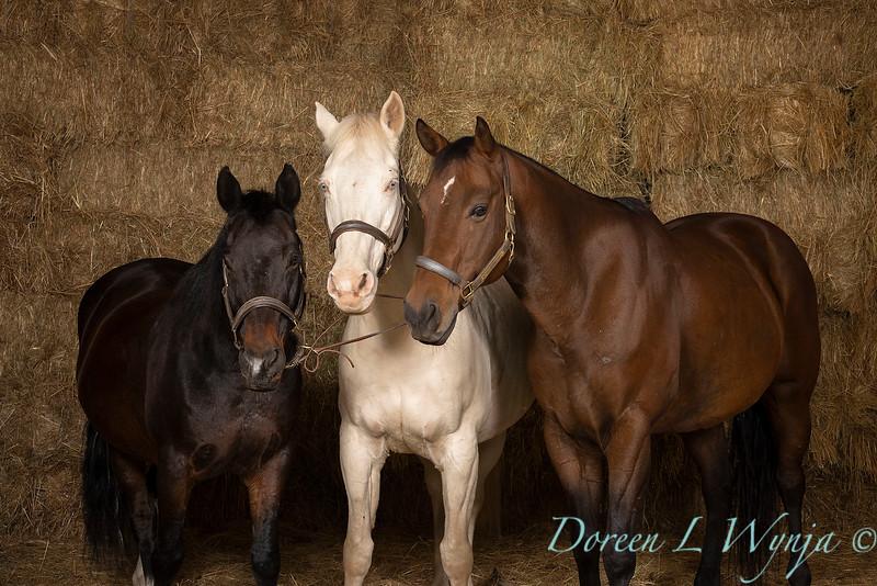 Horse family portrait_130.jpg