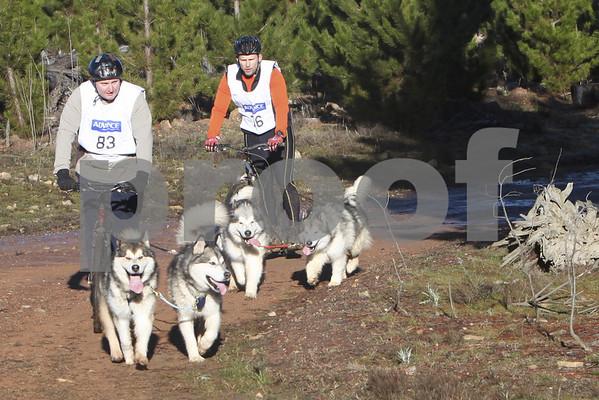 Kowen 2010 - Sunday 2 Dog