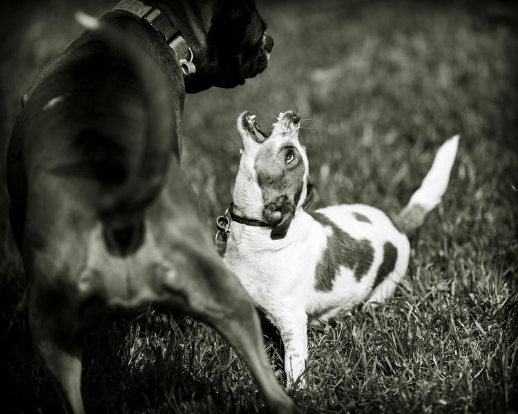 dogs 20201014 257 full.jpg