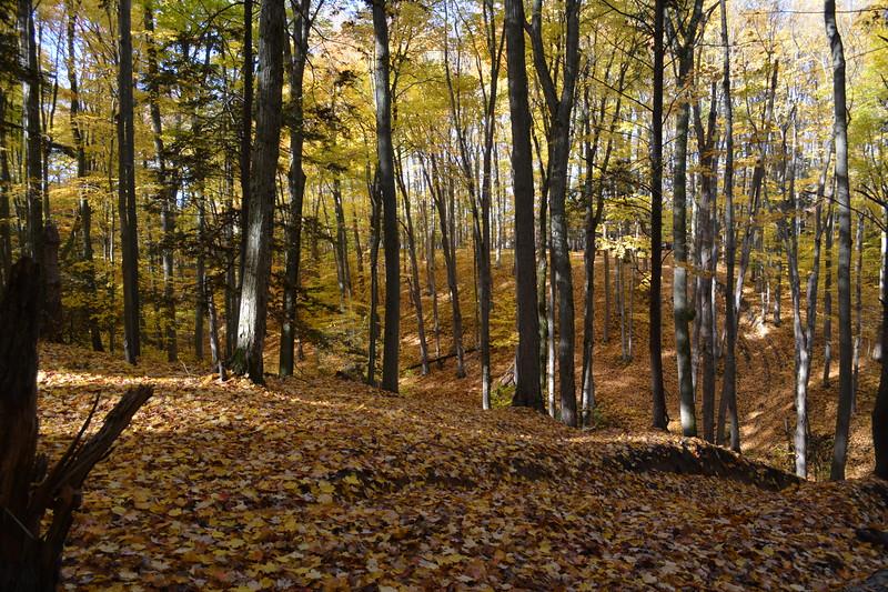 18 Woods West Ravubg.JPG
