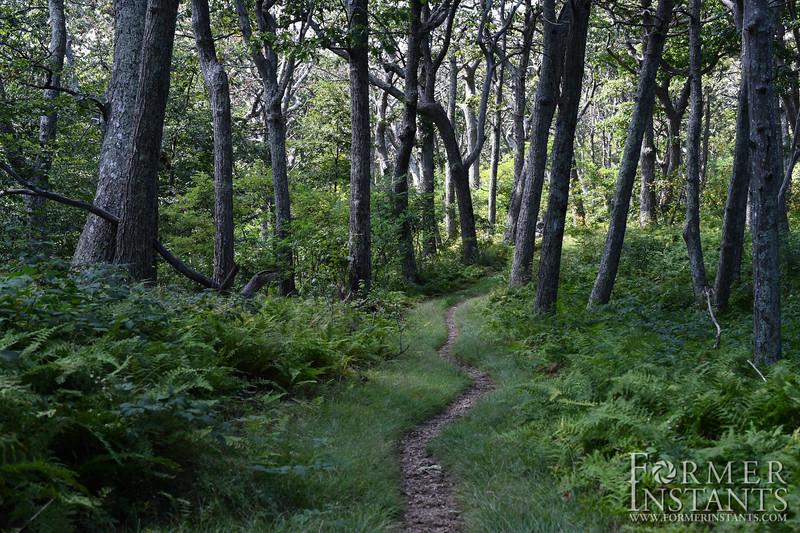 Trail Through Ferns