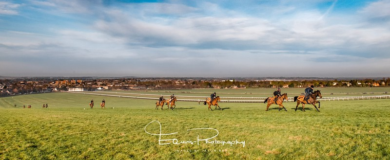 Newmarket Gallops Images