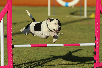 Qld State Agility July 2017